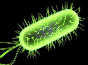 khuan e coli