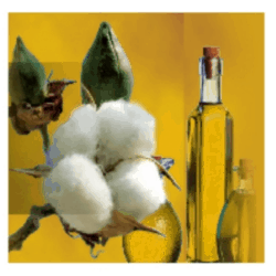 cotton-seed-oil-250x250